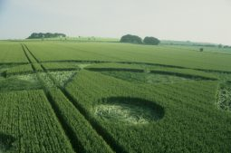 Avebury Trusloe, Wiltshire   20th June 1998   Barley P2 35mm