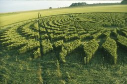 Avebury Trusloe, Wiltshire   22nd July 2000   Wheat P3 35mm