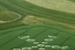 Beckhampton Gallops, Wiltshire   22nd June 2001   Wheat L3 35mm