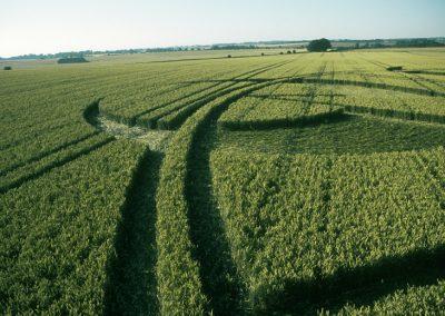 Beckhampton, Wiltshire  13th July 2003   Wheat P3 35mm