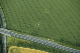 Blandford Forum, Dorset   23rd June 1998   Wheat L 35mm