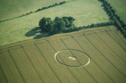 Broadbury Banks, Wiltshire  6th August 2000   Wheat L 35mm