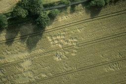 Cherhill, Wiltshire   18th July 1998   Wheat 35mm