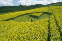 Cherhill, Wiltshire | 26th April 2000 | Oilseed Rape P 35mm