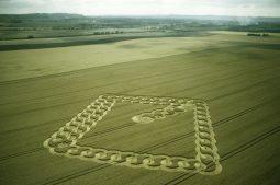 East Field Alton Barnes, Wiltshire | 2nd August 2003 | Wheat L 35mm