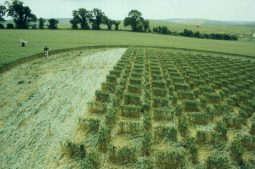 East Kennett, Wiltshire | 12th July 2000 | Wheat P3 35mm
