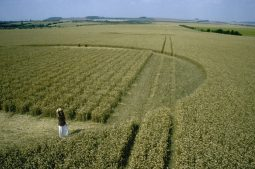 Etchilhampton Grid , Wiltshire | 30th July 1997 | Wheat P4 35mm