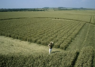 Etchilhampton Grid , Wiltshire | 30th July 1997 | Wheat P3 35mm