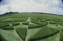 Green Street Avebury, Wiltshire | 6th July 2003 | Wheat P3 35mm