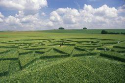 Green Street Avebury, Wiltshire | 6th July 2003 | Wheat P2 35mm