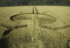 Henwood, Hampshire | 14th July 1997 | Wheat P2 35mm