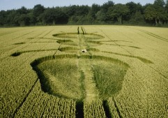 Henwood, Hampshire | 14th July 1997 | Wheat P3 35mm