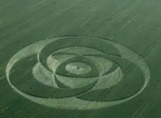 Liddington Castle, Wiltshire | 24th June 2001 | Wheat L2 35mm