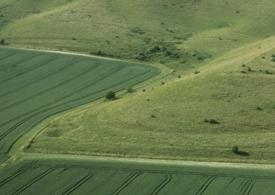 Milk Hill, Wiltshire | 12th July 2001 | Wheat L2 35mm