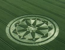 Milk Hill, Wiltshire   12th July 2001   Wheat L 35mm
