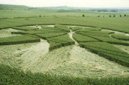 Milk Hill, Wiltshire 1st July 2000   Wheat P3 35mm