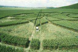 Milk Hill, Wiltshire  1st July 2000   Wheat P4 35mm