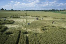 Silbury Hill, Wiltshire | 23rd July 1997 | Wheat P2 35mm