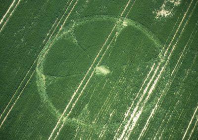 West Kennett Longbarrow, Wiltshire   24th June 2001 Wheat 35mm