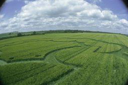 Windmill Hill, Wiltshire | 6th June 2003 | Wheat P2 35mm