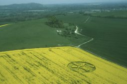 Woodborough Hill, Wiltshire | 30th April 1999 | Oilseed Rape L 35mm