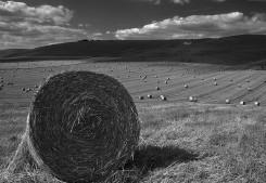 Milk Hill at Harvest