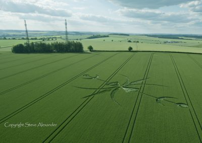 Newton Barrow, Stoford, Wiltshire | 15th June 2015 | Wheat L4