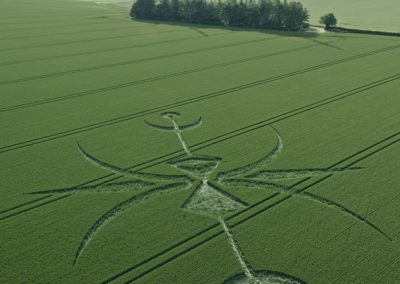 Newton Barrow, Stoford, Wiltshire | 15th June 2015 | Wheat L