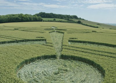 Clearbury Ring, nr Nunton, Wiltshire | 7th July 2015 | Wheat LOW5