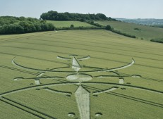 Clearbury Ring, nr Nunton, Wiltshire | 7th July 2015 | Wheat L7