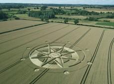 Haselor, Warwickshire | 19th June 2015 | Wheat L2