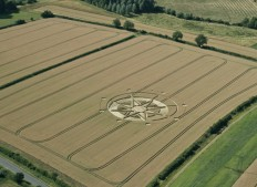 Haselor, Warwickshire | 19th June 2015 | Wheat LL