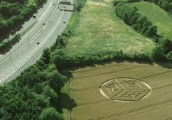 Ockley Hill, Merstham, Surrey   19 07 15 Wheat L3
