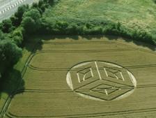 Ockley Hill, Merstham, Surrey   19 07 15 Wheat L2
