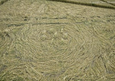 Etchilhampton, Wiltshire | 4th August 2015 | Wheat CL2