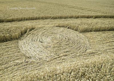 Ox Drove, nr Bowerchalke, Wiltshire | 8th August 2015 | Wheat DE3