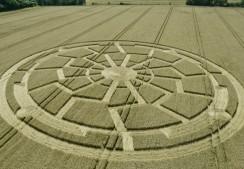 Ox Drove, nr Bowerchalke, Wiltshire   8th August 2015   Wheat L3