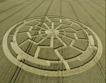 Ox Drove, nr Bowerchalke, Wiltshire   8th August 2015   Wheat L