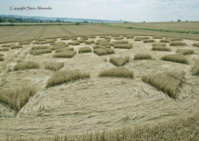 Etchilhampton 2, nr Devizes, Wiltshire | 19th August 2015 | Wheat D