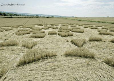 Etchilhampton 2, nr Devizes, Wiltshire | 19th August 2015 | Wheat D2