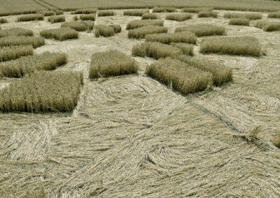 Etchilhampton 2, nr Devizes, Wiltshire | 19th August 2015 | Wheat D6
