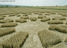 Etchilhampton 2, nr Devizes, Wiltshire | 19th August 2015 | Wheat D4