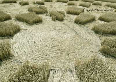Etchilhampton 2, nr Devizes, Wiltshire | 19th August 2015 | Wheat D5