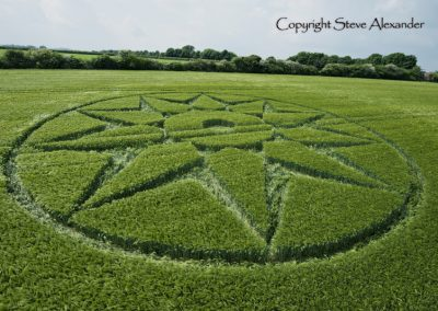Willoughby Hedge, nr Mere, Wilts | 5th June 2016 | Barley Low2