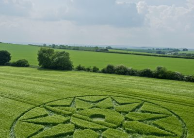 Willoughby Hedge, nr Mere, Wilts | 5th June 2016 | Barley L