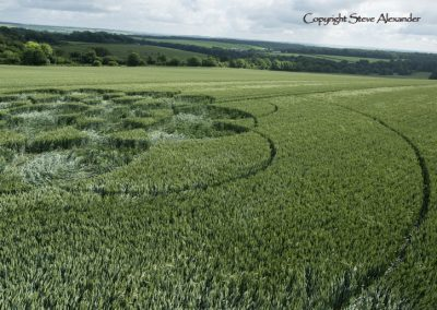 Chilcomb Down, nr Winchester, Hants | 21st June 2016 | Wheat Low