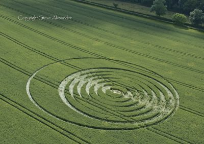 Fulley Wood, nr Tichborne, Hants | 24th June 2016 | Wheat L3