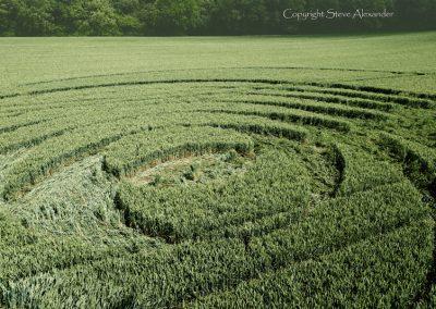 Fulley Wood, nr Tichborne, Hants | 24th June 2016 | Wheat Low3