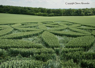 Blackwood, nr Popham, Hants | 27th June 2016 | Wheat Low2