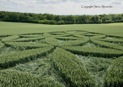 Blackwood, nr Popham, Hants | 27th June 2016 | Wheat Low